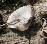 Free Photo - Sea Shell