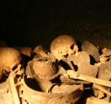 Free Photo - Pile of bones and skulls