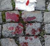 Free Photo - Blood on the pavement