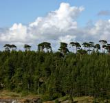Free Photo - Trees by the fjord