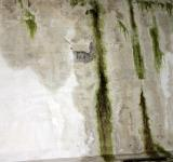 Free Photo - Green slimy concrete wall