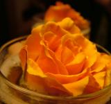Free Photo - Orange rose in container
