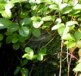 Free Photo - Leafs and spiderweb