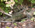 Free Photo - Treestumps in the woods