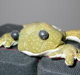 Free Photo - Stuffed frog