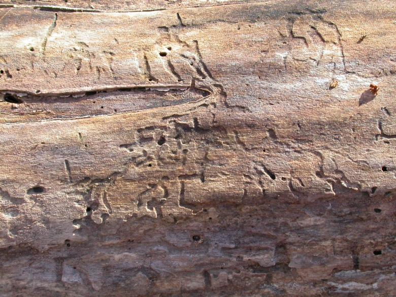 Free Stock Photo of Cracked wood texture Created by raymond henry
