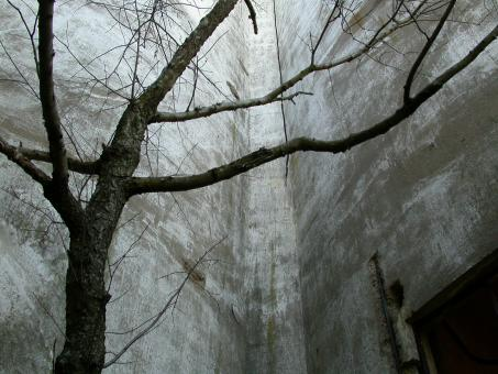 tree against concrete wall - Free Stock Photo