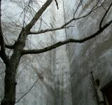 Free Photo - tree against concrete wall