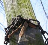 Free Photo - Rusted chain