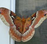 Free Photo - Furry Moth