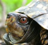 Free Photo - Turtle head