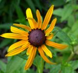 Free Photo - Yellow sunflower