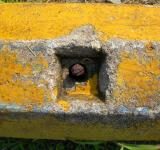 Free Photo - Rusted bolt in yellow concrete wall