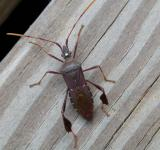 Free Photo - Insect walking on wood