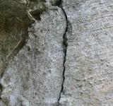 Free Photo - Cracked Concrete