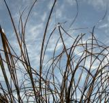 Free Photo - Straws against the sky