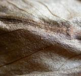 Free Photo - Leaf Closeup
