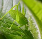 Free Photo - Green bug