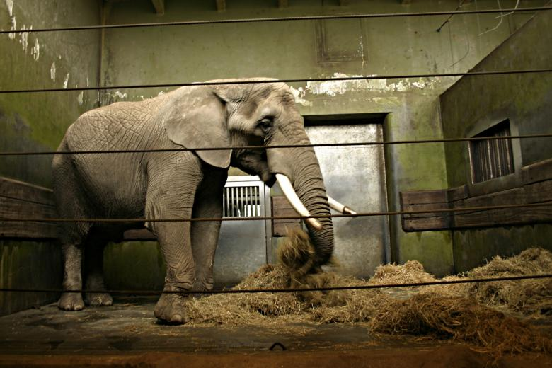 Free Stock Photo of Elephant in cage Created by Bjorgvin
