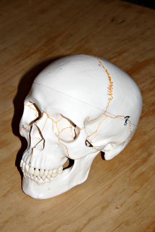 Free Stock Photo of Plastic skull Created by Bjorgvin