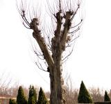 Free Photo - A tree with bare branches