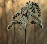 Free Photo - Furry plant