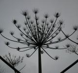 Free Photo - Silhouette of a plant