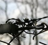 Free Photo - Barb wire