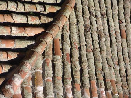 Roof tiles - Free Stock Photo