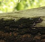 Free Photo - Old wood closeup