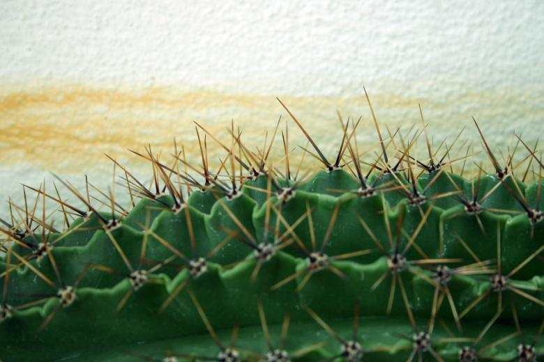 Free Stock Photo of Cactus Created by Bjorgvin
