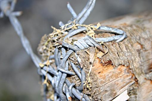 Barbed wire closeup - Free Stock Photo