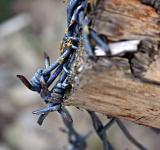 Free Photo - Barbed wire closeup