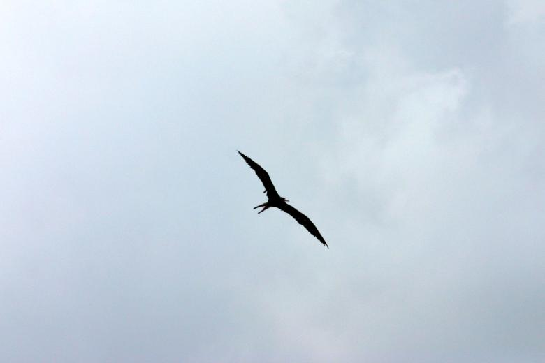 Free Stock Photo of Bird flying Created by shaun newcomb
