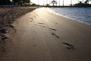 Download Footsteps in the sand Free Photo