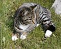 Free Photo - A cat lying in grass
