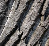 Free Photo - Cracked wood
