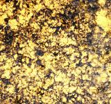 Free Photo - Golden cracked surface