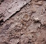 Free Photo - Mud surface