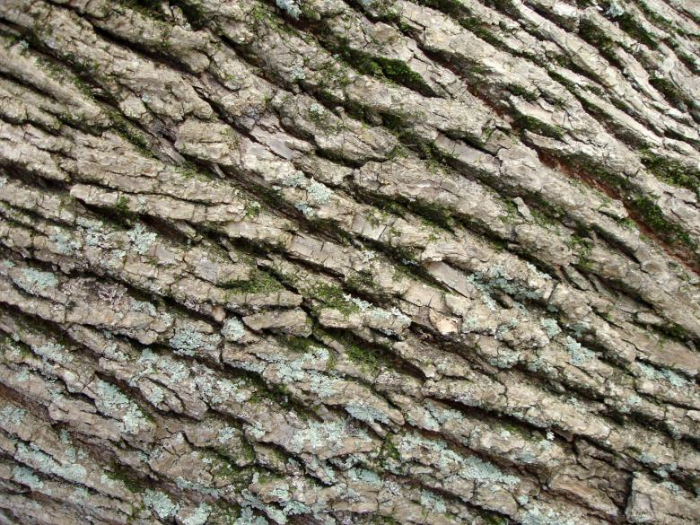 Free Stock Photo of Tree bark Created by Darren Hester