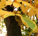 Free Photo - Yellow leafs