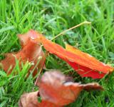 Free Photo - Leafs in the grass