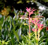Free Photo - Pink and green plants