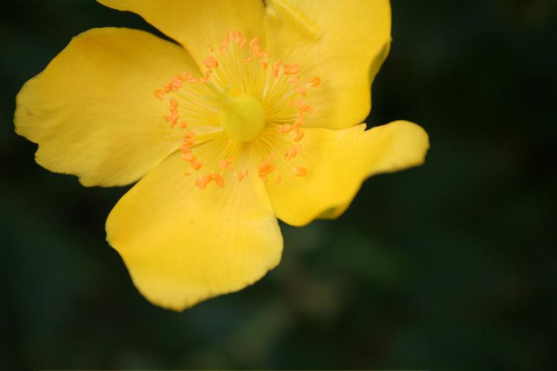 Yellow Flower Free Photo