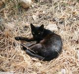 Free Photo - A black cat