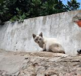 Free Photo - White and brown cat
