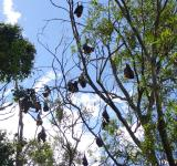 Free Photo - Bats hanging from a tree