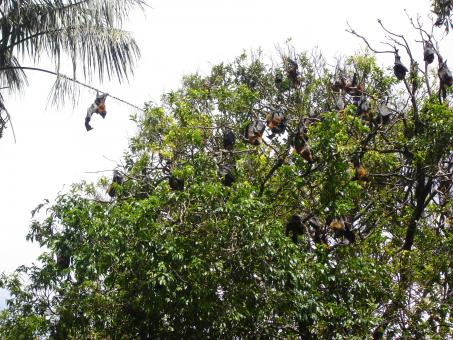 Bats hanging from a tree - Free Stock Photo