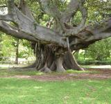 Free Photo - Huge tree