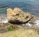 Free Photo - Rock at the beach